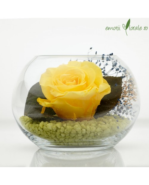 Aranjament floral trandafir stabilizat yellow BU21Y2
